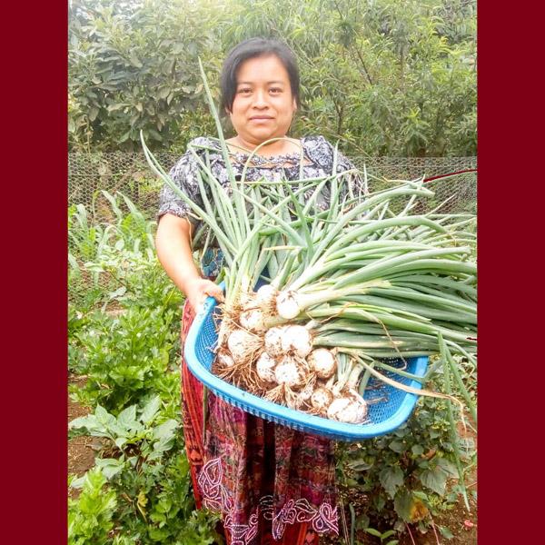 Guatemala - Woman Holding Basket of Onions